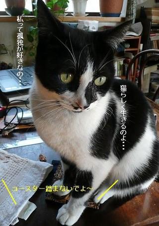 Ohagi0303_2