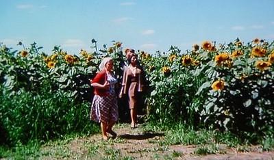 Sunflower2_2